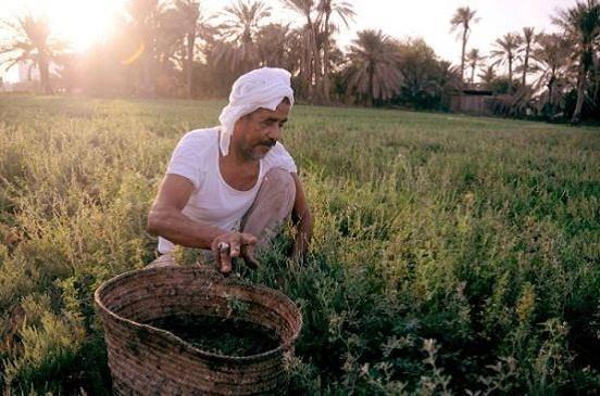 الزراعة: ثورة يوليو جعلت الفلاح مالكا للأرض بعد أن كان أجيرا